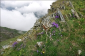 Fog, flowers and rocks